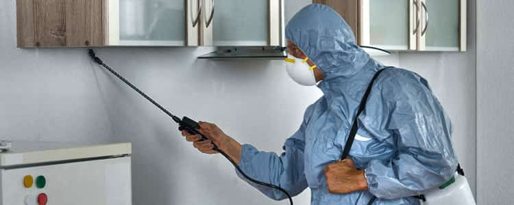 Best Pest Control Semaphore